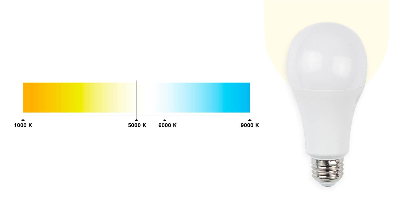 The lightbulbs we used with a 5000K color temp